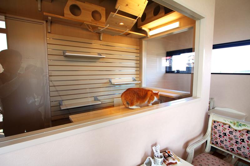 ねこスペースで遊ぶ猫ちゃん